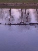 Rzeka Odra - od portu do �luzy Januszkowice
