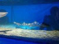Na rekiny w Polsce