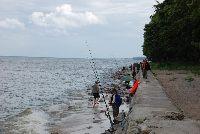 Morze to nie tylko kutry i dorsze - Falochron Rozewie