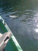 Jezioro Stocksee Niemcy