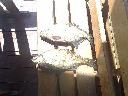 Jeziorowy sp�awik dla pocz�tkuj�cych - �owienie na sp�awik w jeziorze