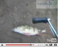 Film w�dkarski - Oko� na boczny trok