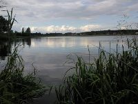 Jezioro (zalew) w DRZEWICY