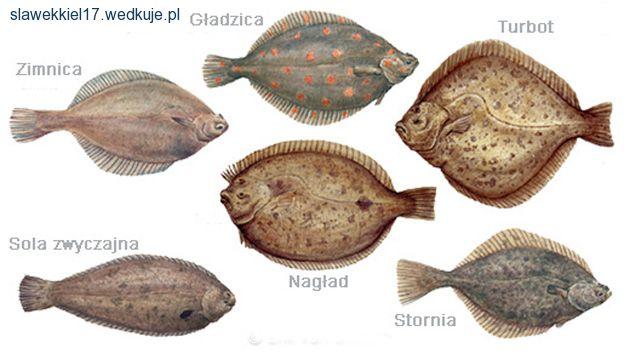 Ryby fl�drokszta�tne | na rybach, zdj�cia, opinie