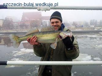 Okres ochronny sandacza na wodach SUM - ochrona ryb, w�d, zdj�cia, opinie
