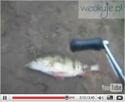 Film w�dkarski - Oko� na boczny trok | �owienie metod�, zdj�cia, opinie